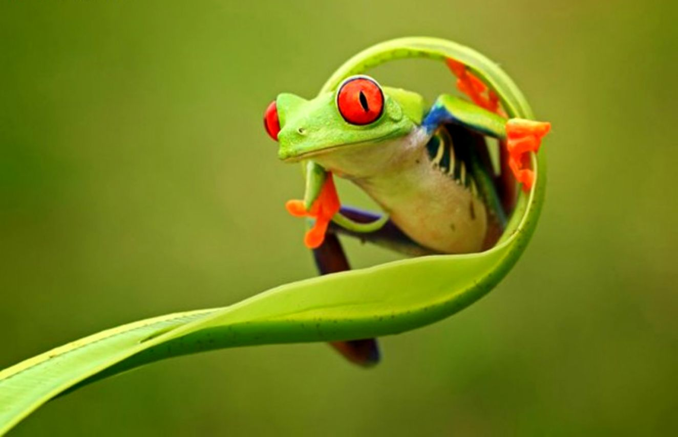 Tree Frog Wallpaper Posted By Sarah Walker