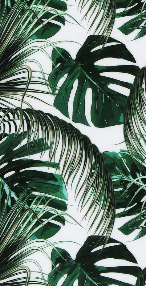 Green Leaves aesthetic wallpaper aesthetic wallpa