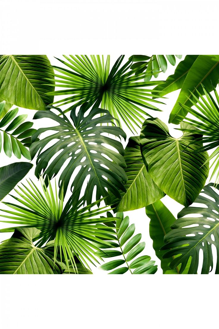 Tropical Aesthetic Wallpaper Posted By Sarah Mercado Best tropical leaves desktop wallpapers to download for free. tropical aesthetic wallpaper posted by