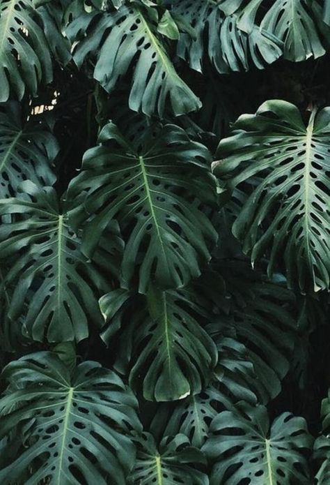 Tropical Aesthetic Wallpaper Posted By Sarah Mercado
