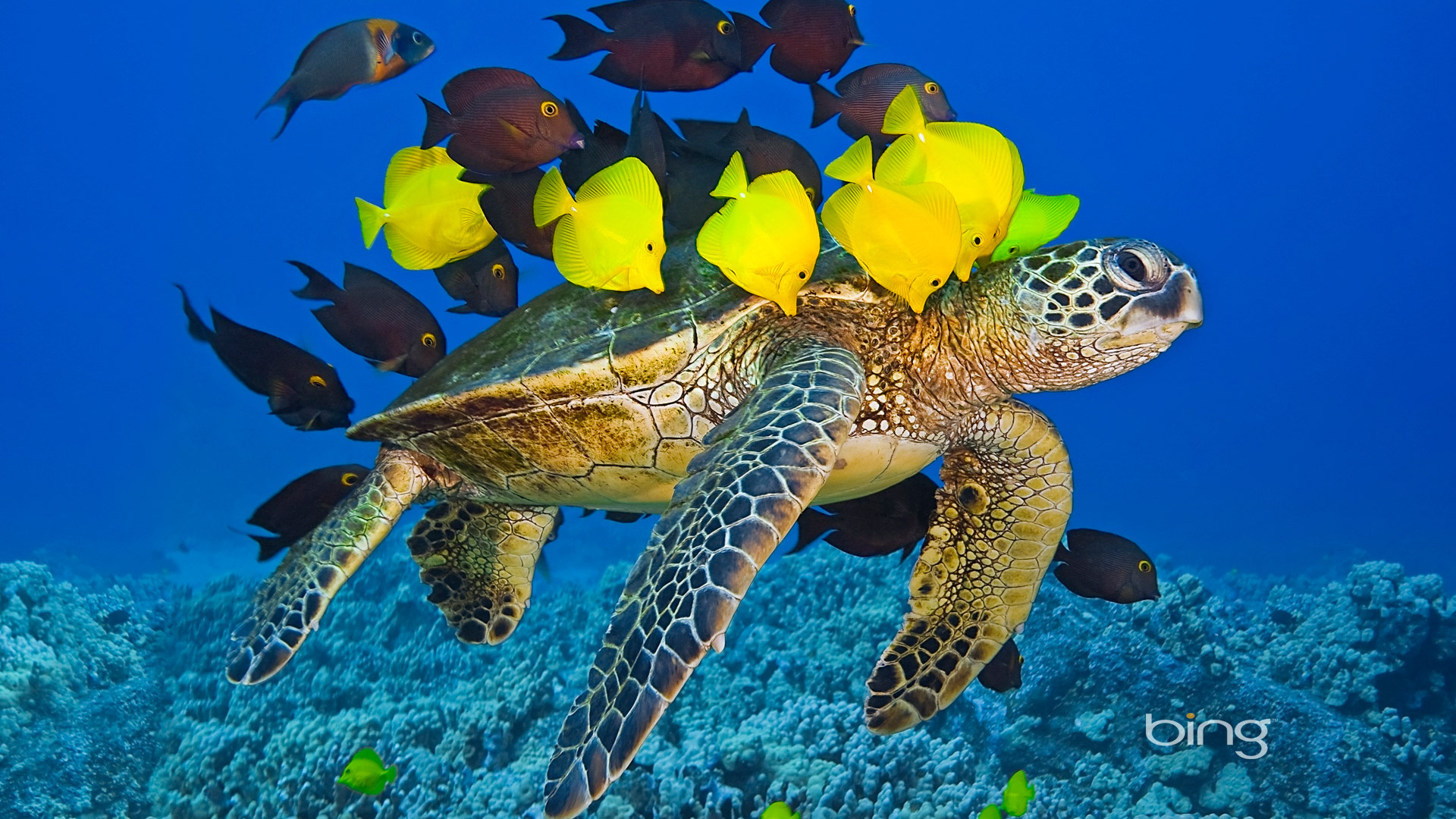 Tropical Fish Backgrounds Posted By John Walker