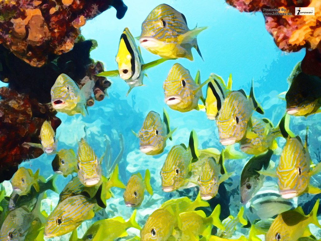 Tropical Fishes Wallpapers