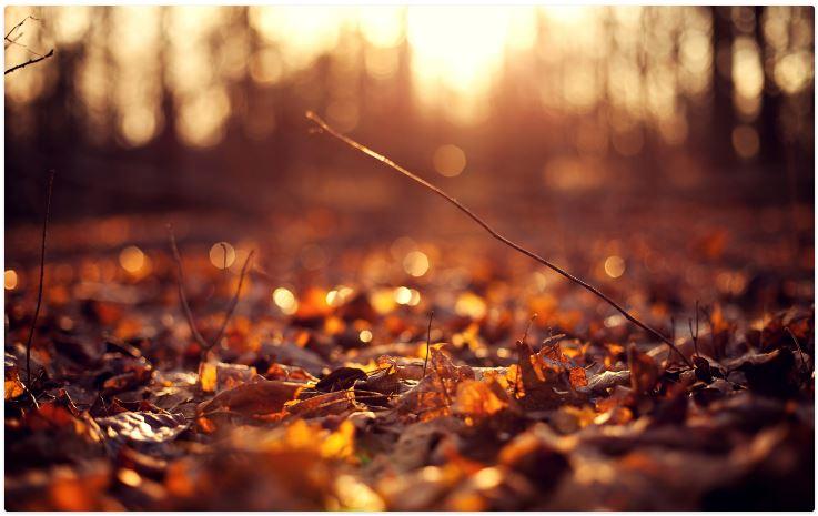 Autumn tumblr wallpapers hd HD Wallpaper