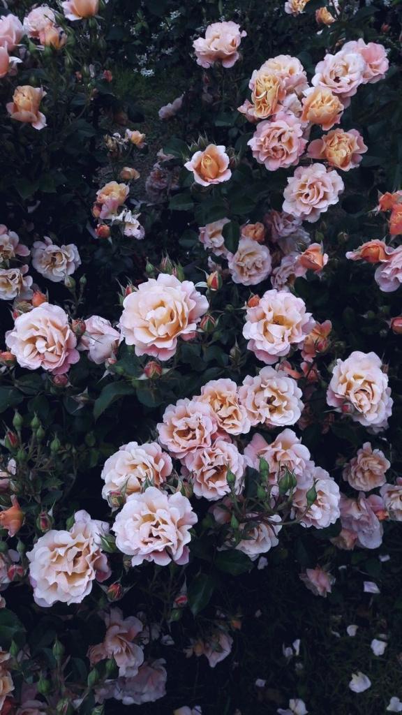 Wallpaper Iphone Aesthetic Tumblr Rose Total Update