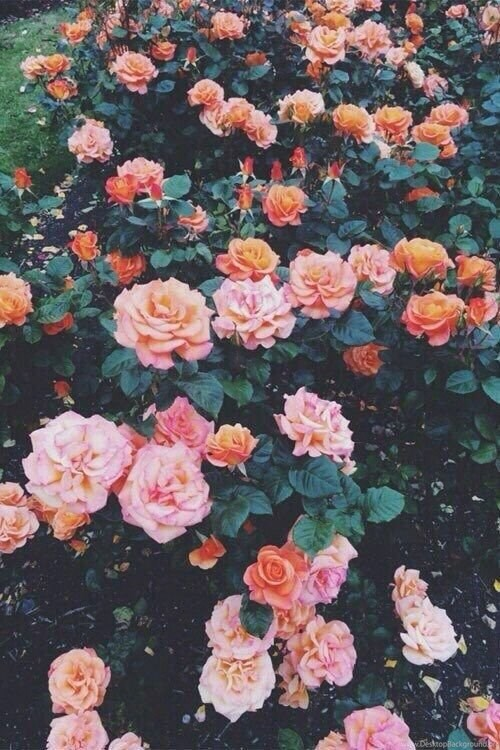 Backgrounds, Flowers, Hd, Iphone, Orange, Pink, Tumblr
