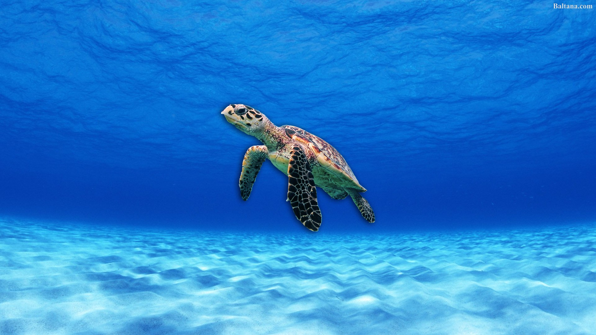 Turtle Wallpapers Posted By Michelle Cunningham