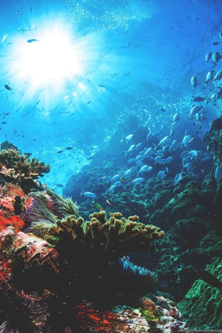 Under Sea Wallpaper Posted By Zoey Mercado