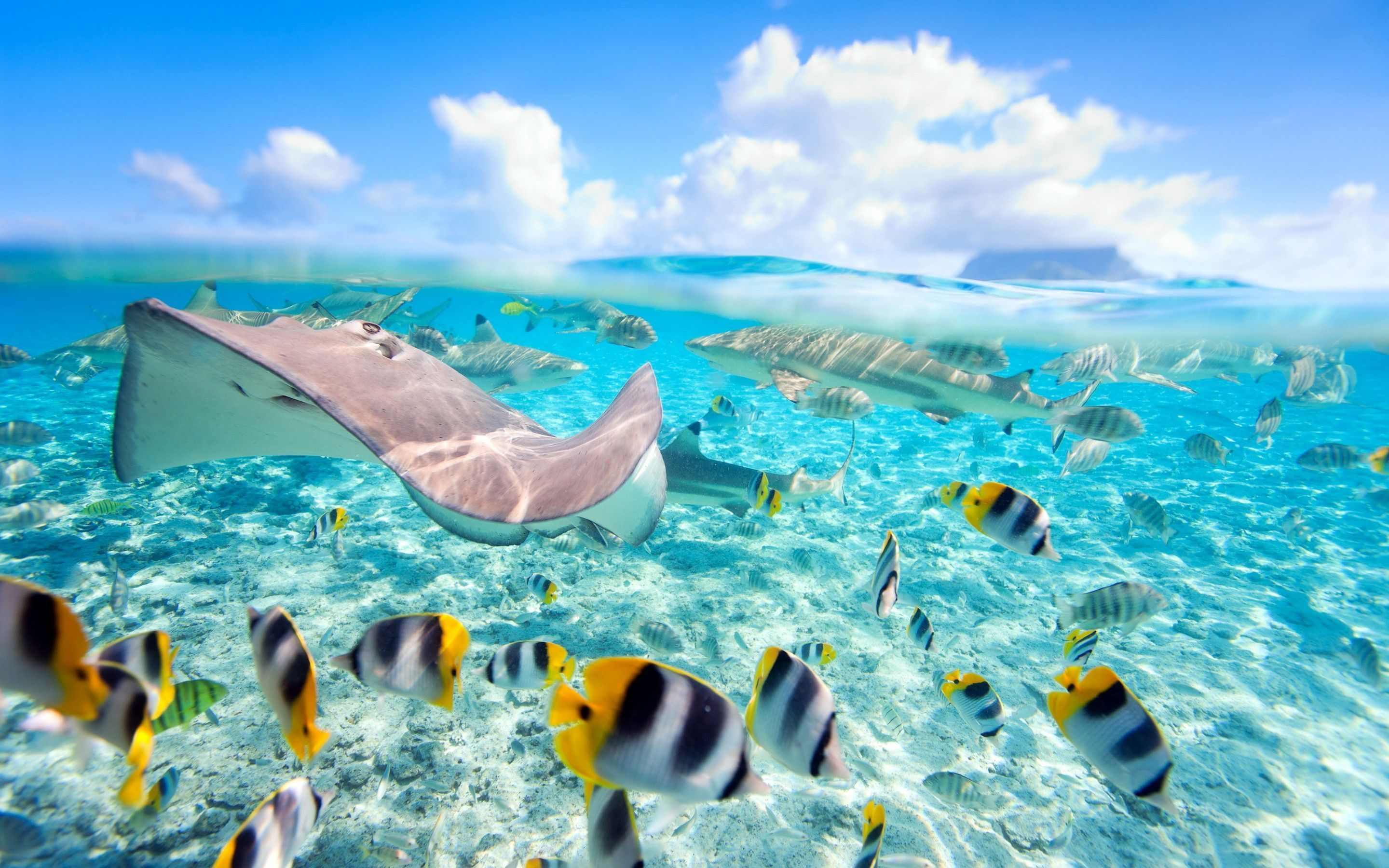 Hawaii Exotic Fish Crystal Clear Water Underwater World