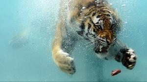 The Best Underwater Wallpaper Hd Desktop Pics