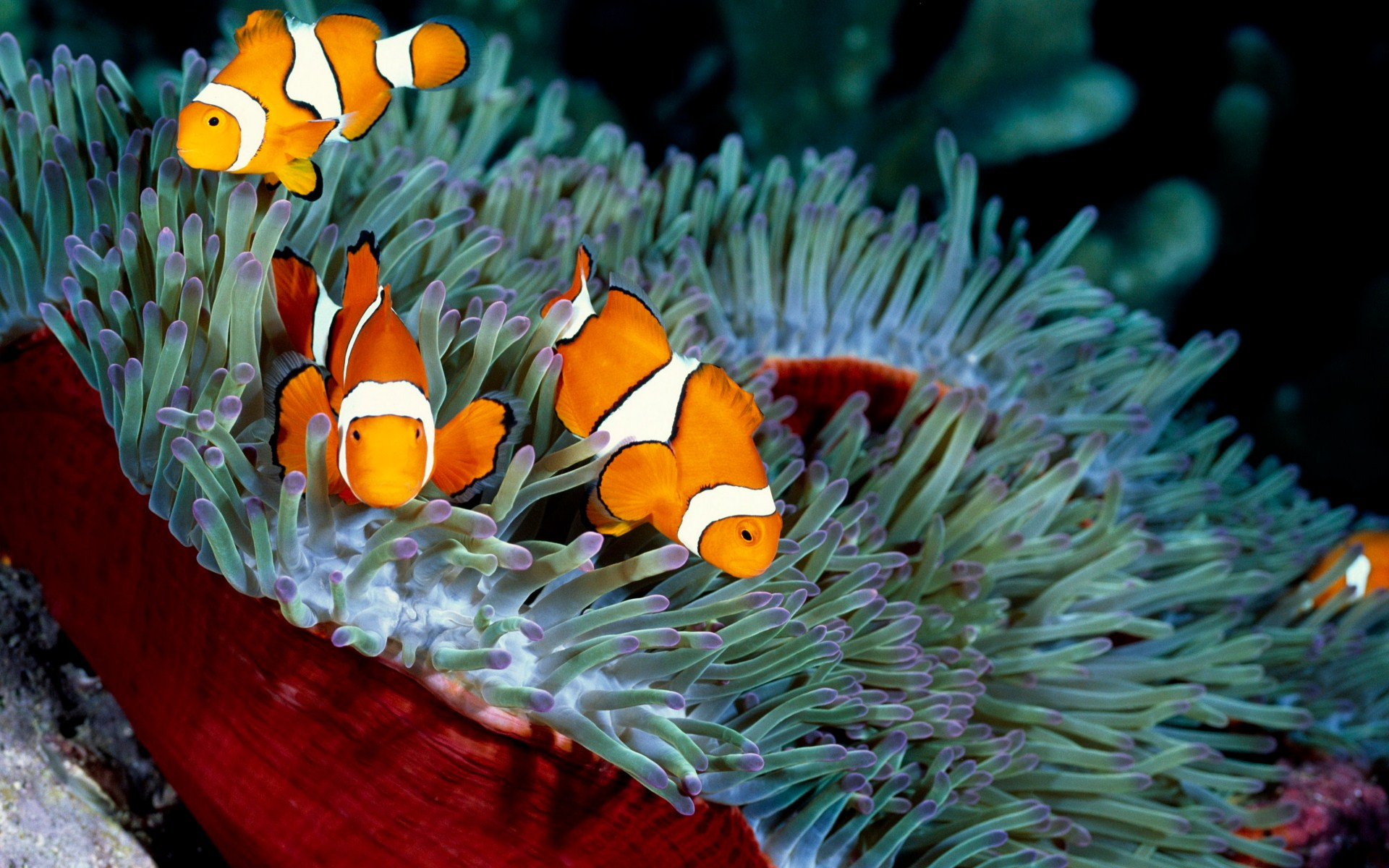underwater ocean photos hd wallpaper Genesis Divers