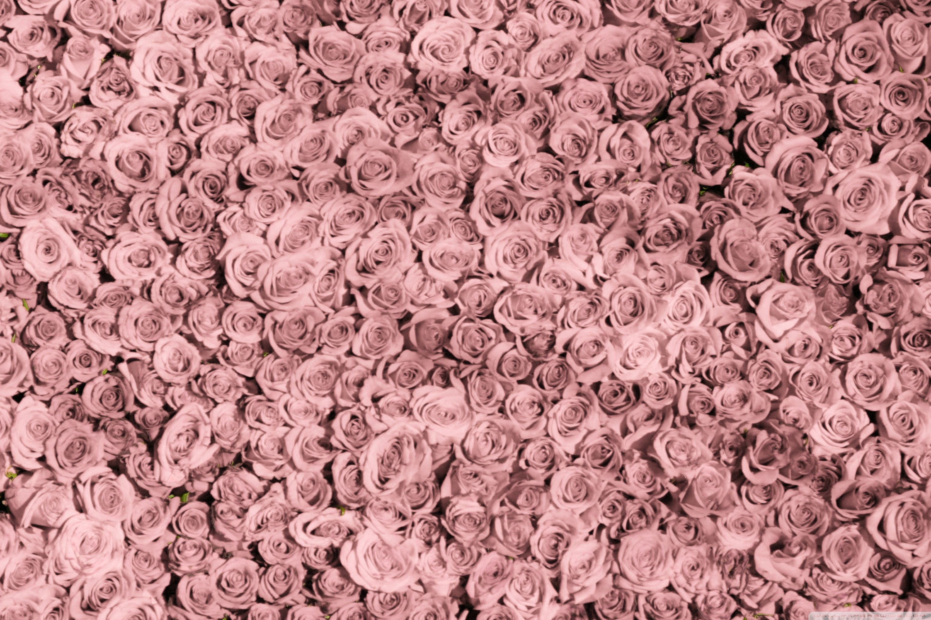 Vintage Rose Iphone Wallpapers Posted By Ryan Mercado
