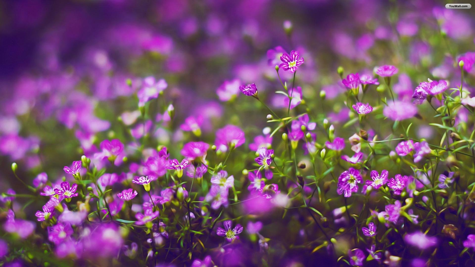 Violet Flower Wallpapers Posted By Ryan Cunningham