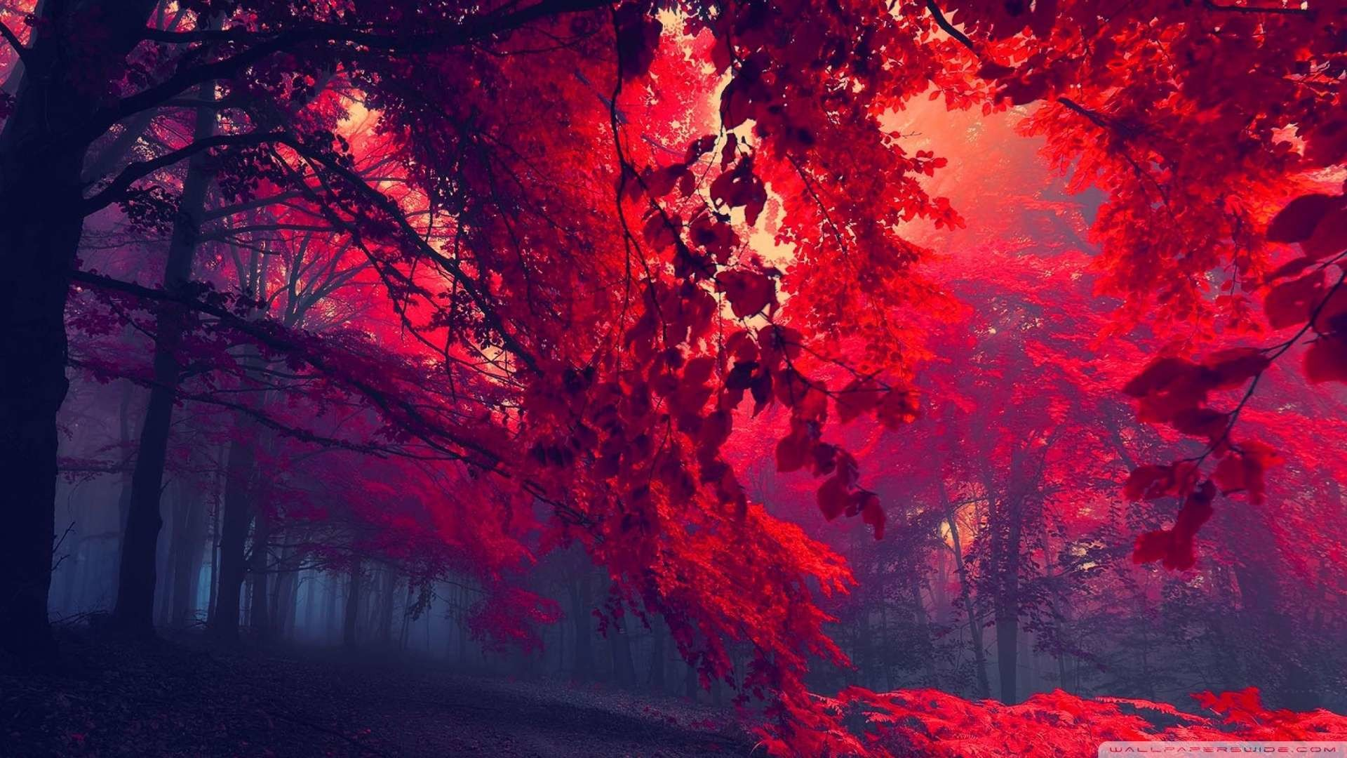 Red HD Wallpapers 1080p 73+ images