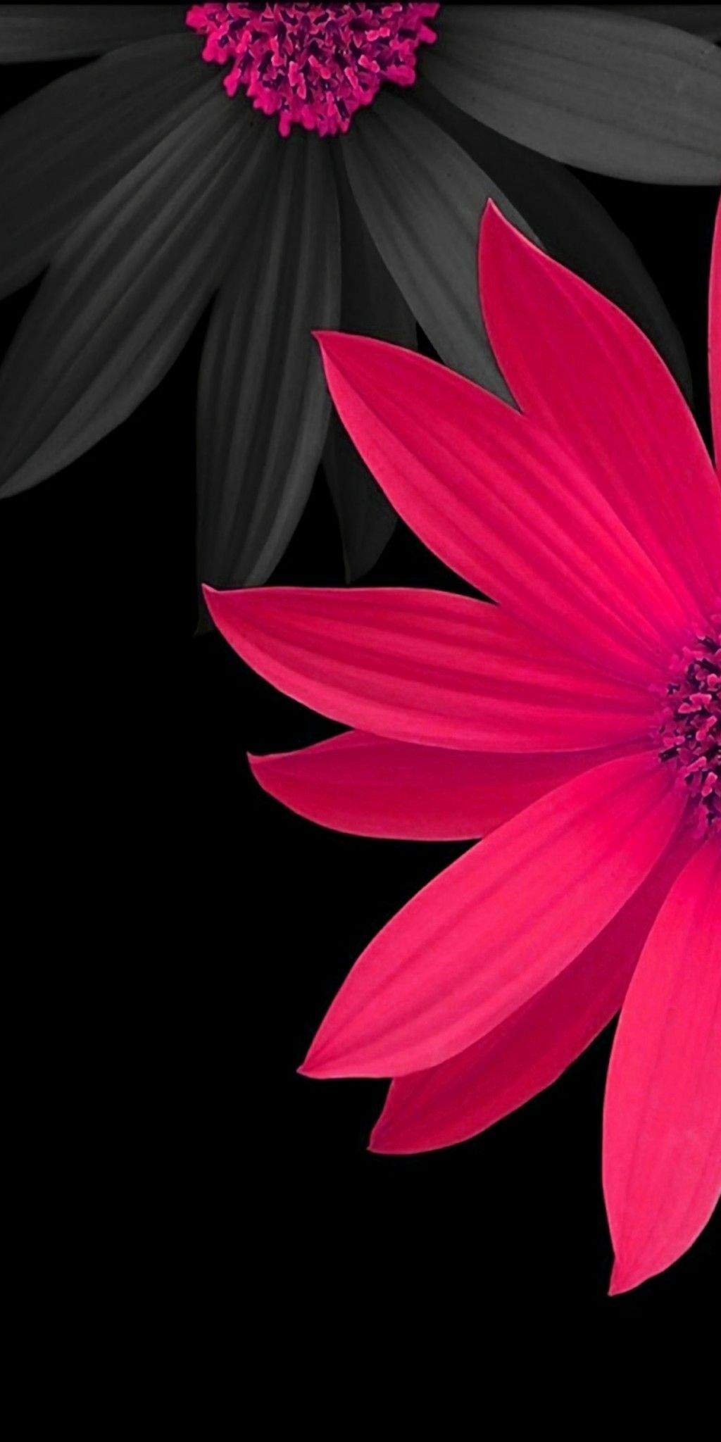 Wallpaper 3d Flower Posted By John Anderson