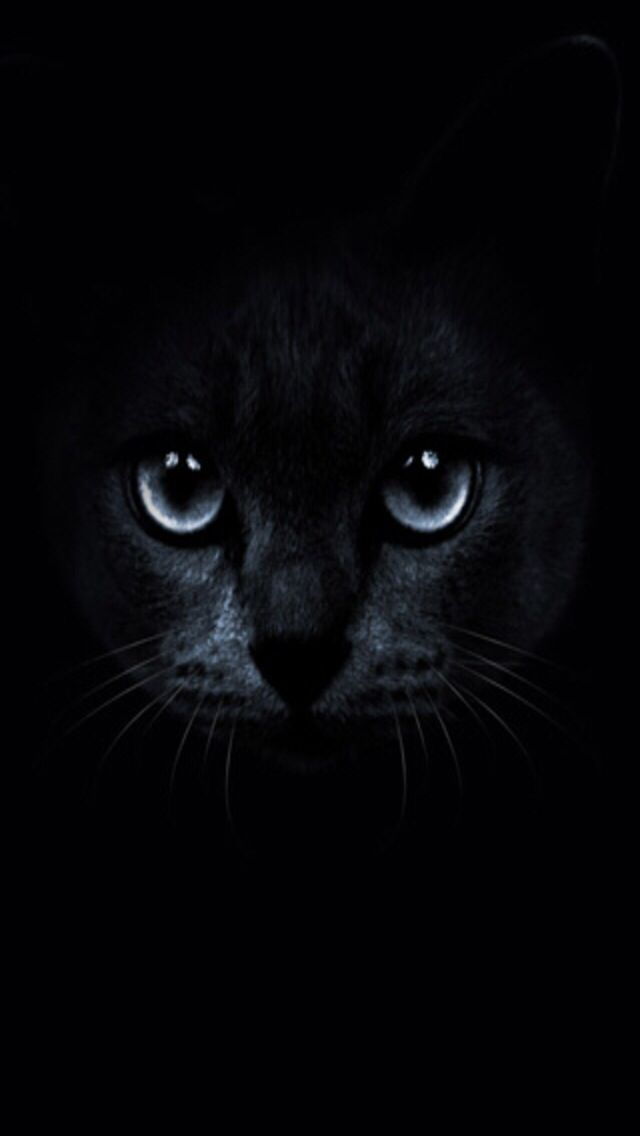 Wallpaper Black Cat Posted By Michelle Tremblay