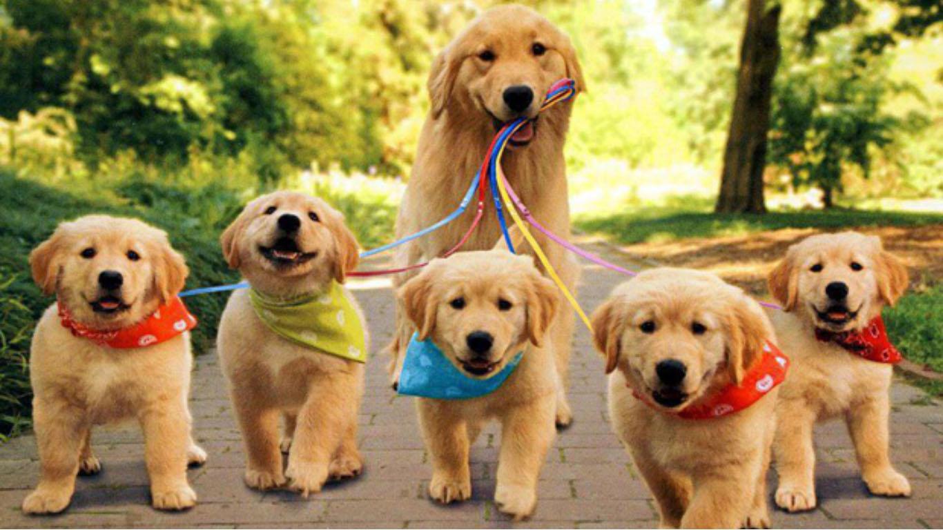 Wallpaper Cute Puppy Posted By Zoey Peltier