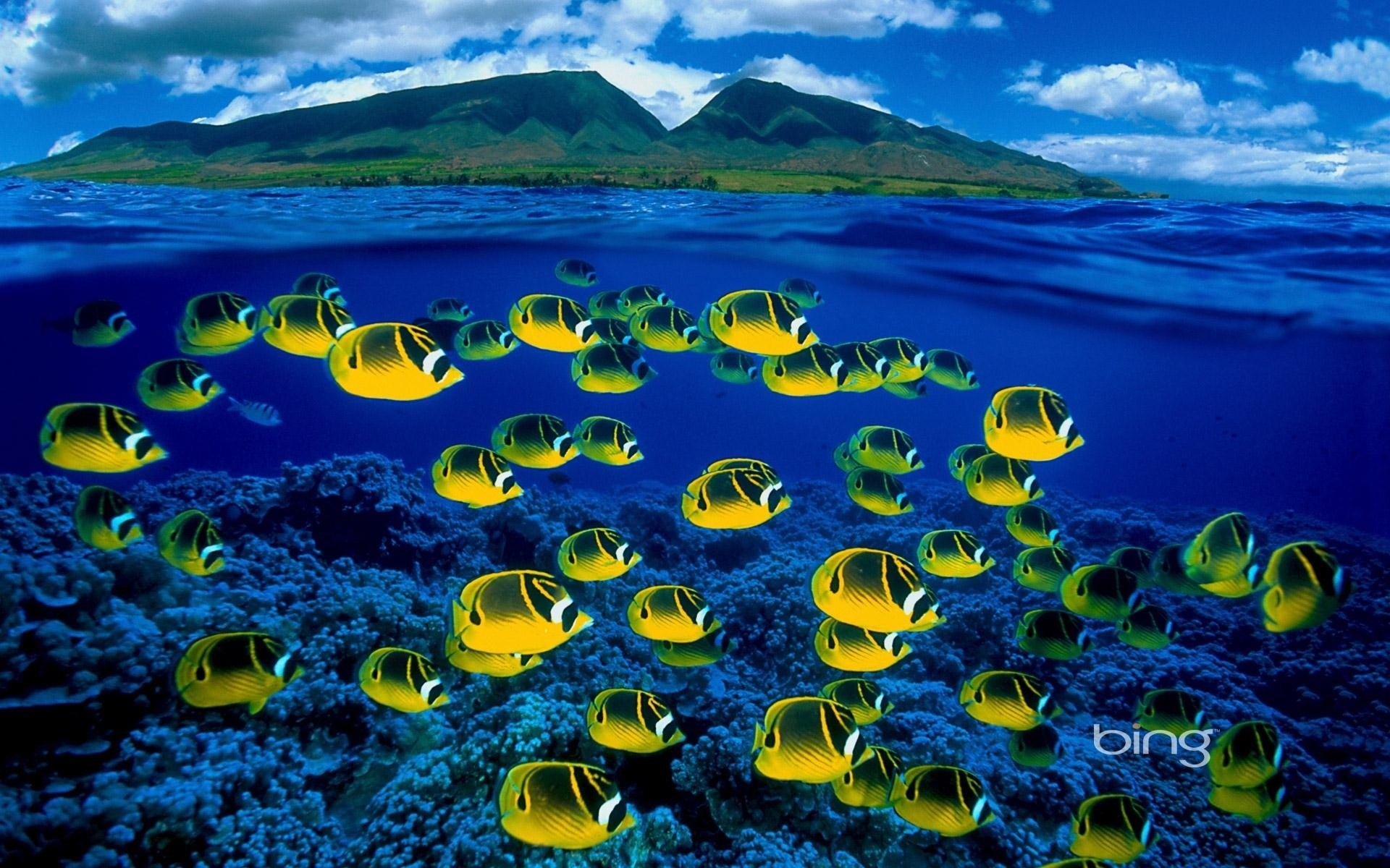 Wallpaper Fish In Water Posted By Michelle Mercado