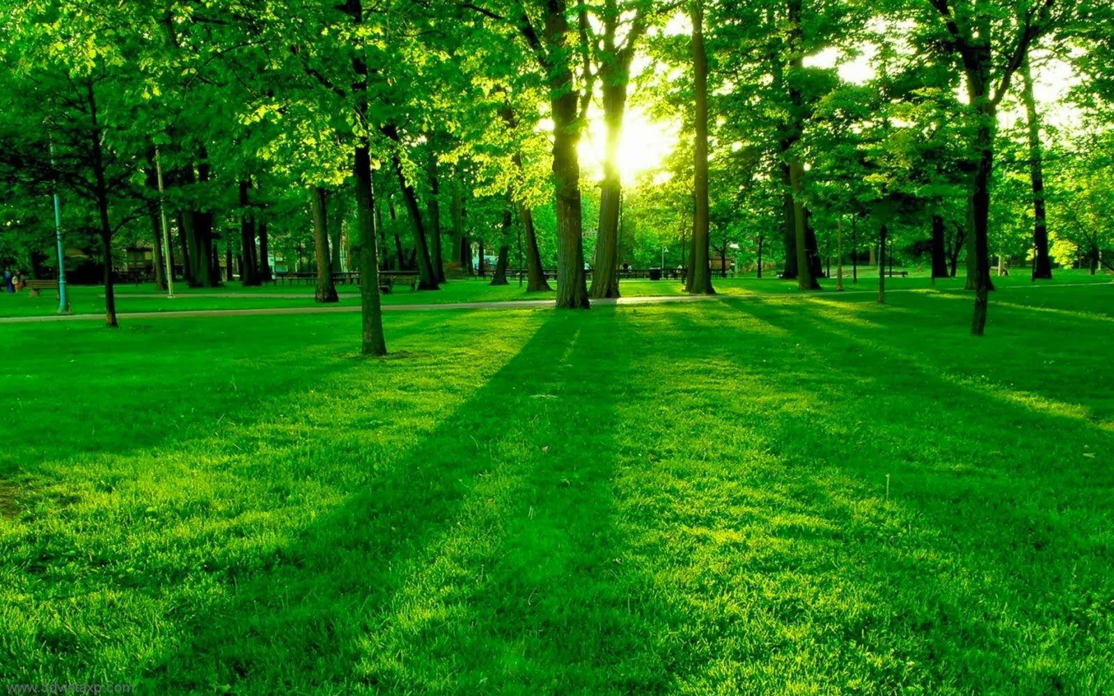 Wallpaper Hd 1080p Nature Green Posted By Samantha Mercado