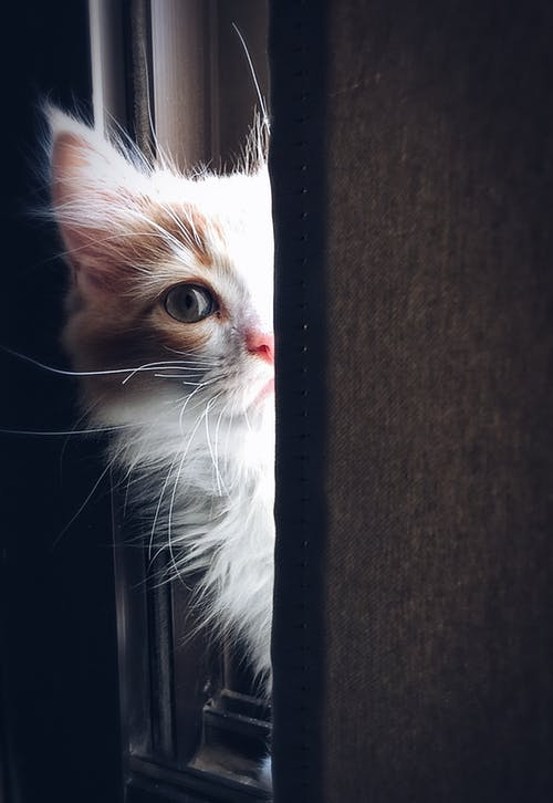 Wallpaper Hd Cat Posted By Michelle Mercado