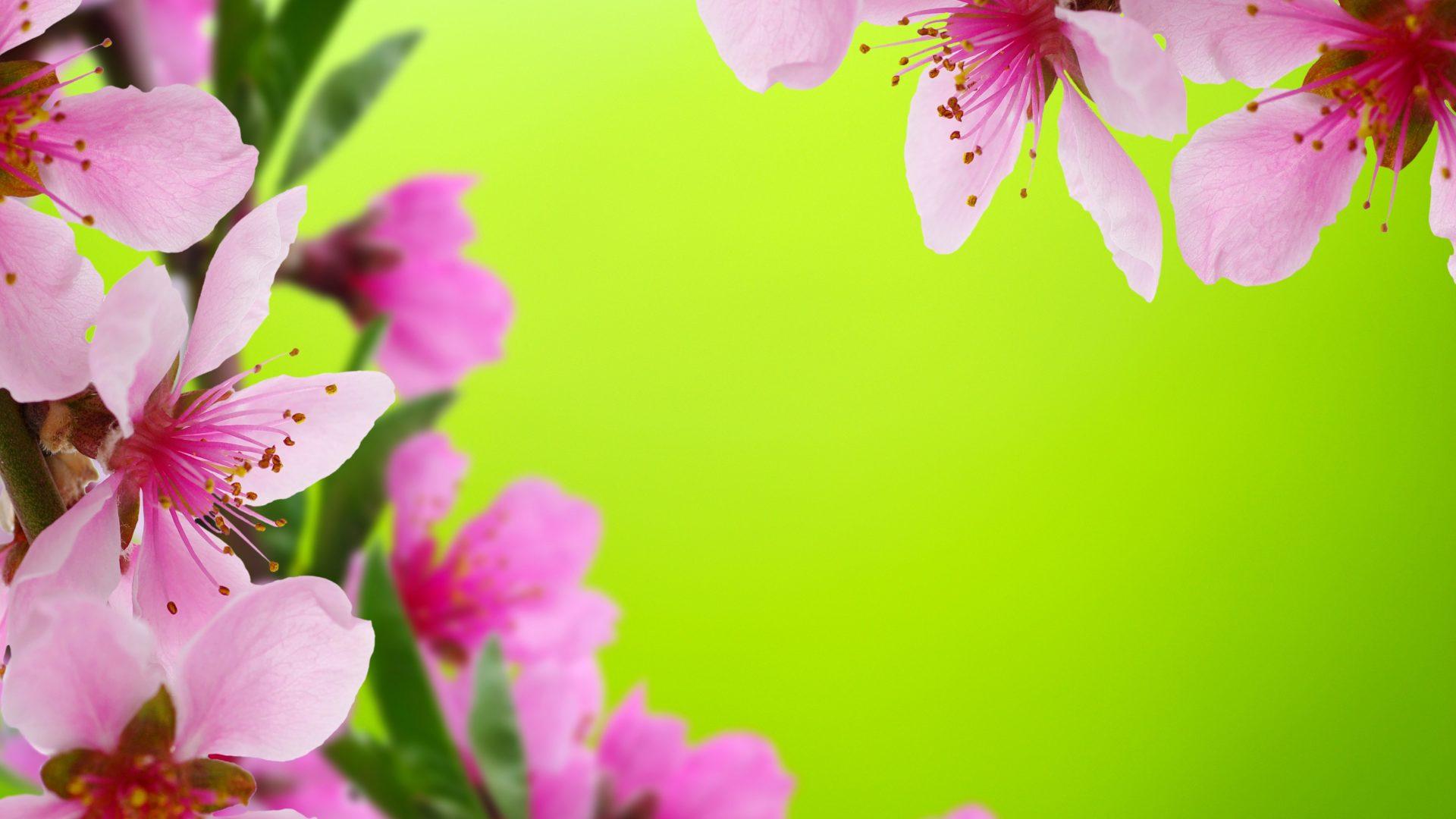 Beautiful Flower Wallpapers For Desktop Full Screen