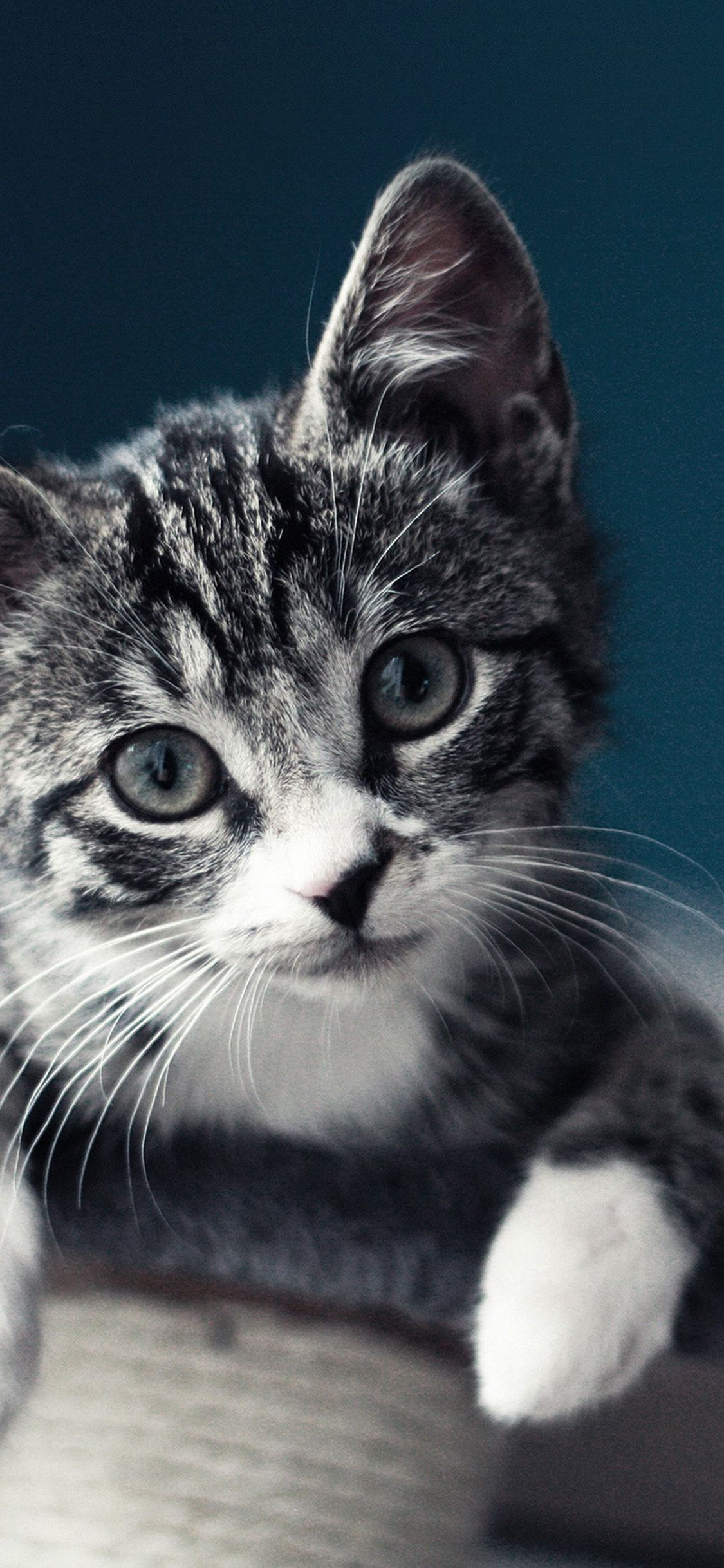 Wallpaper Kitten Posted By Christopher Johnson