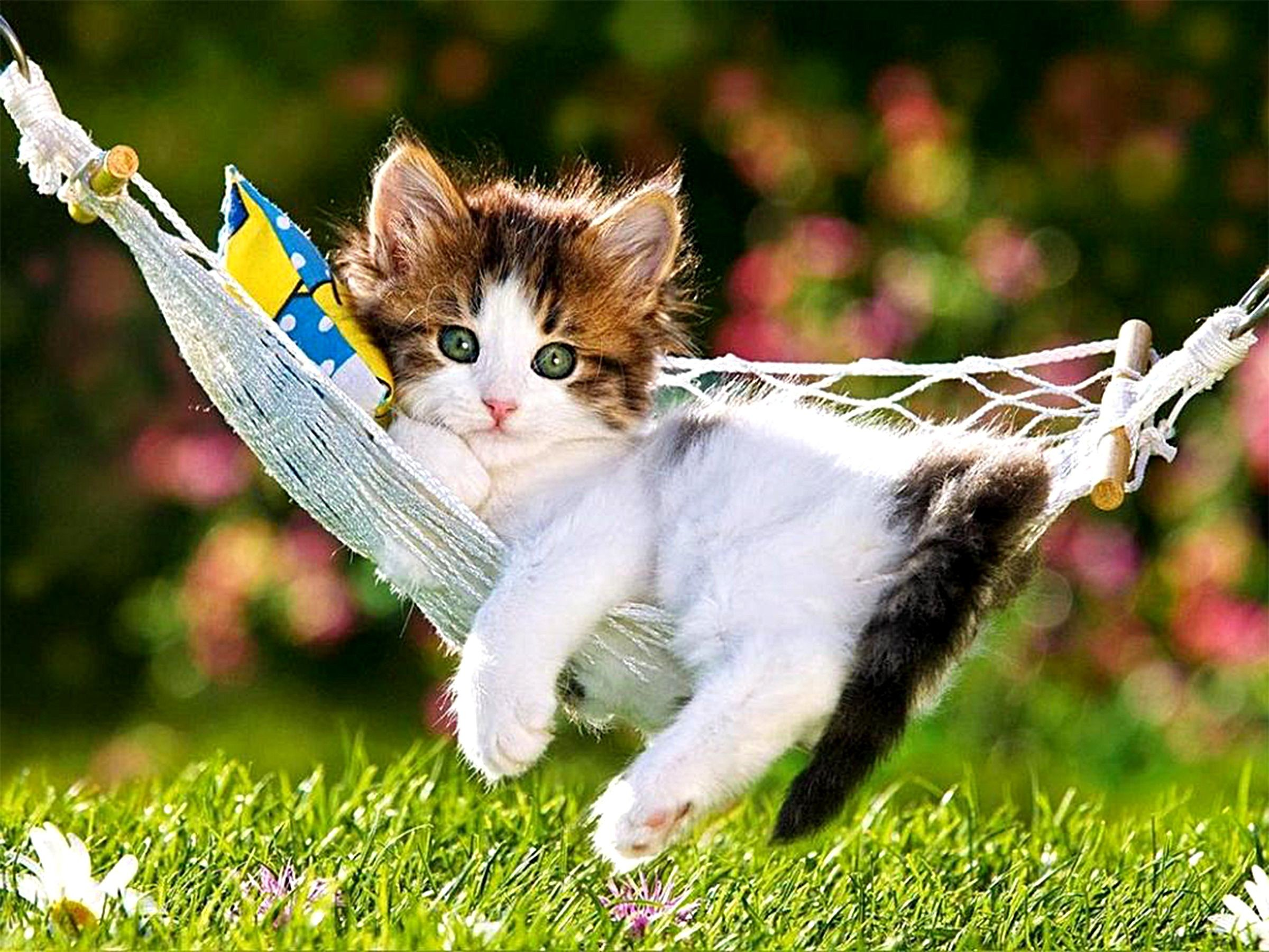 Wallpaper Kittens Posted By Samantha Sellers
