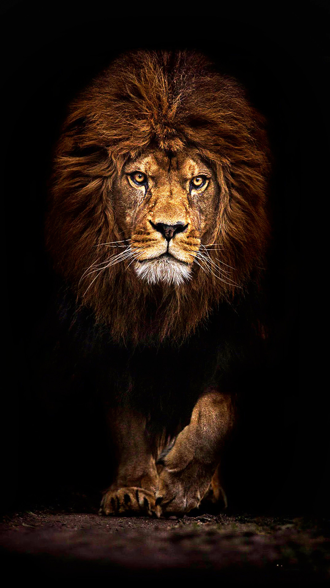 Wallpaper Lion Posted By Sarah Tremblay