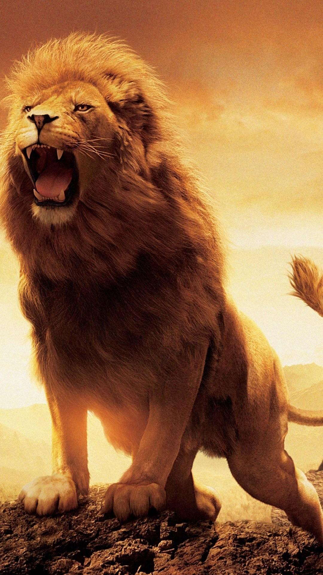 Lion Hd Wallpapers For Iphone Lion Wallpapers For Iphone 6