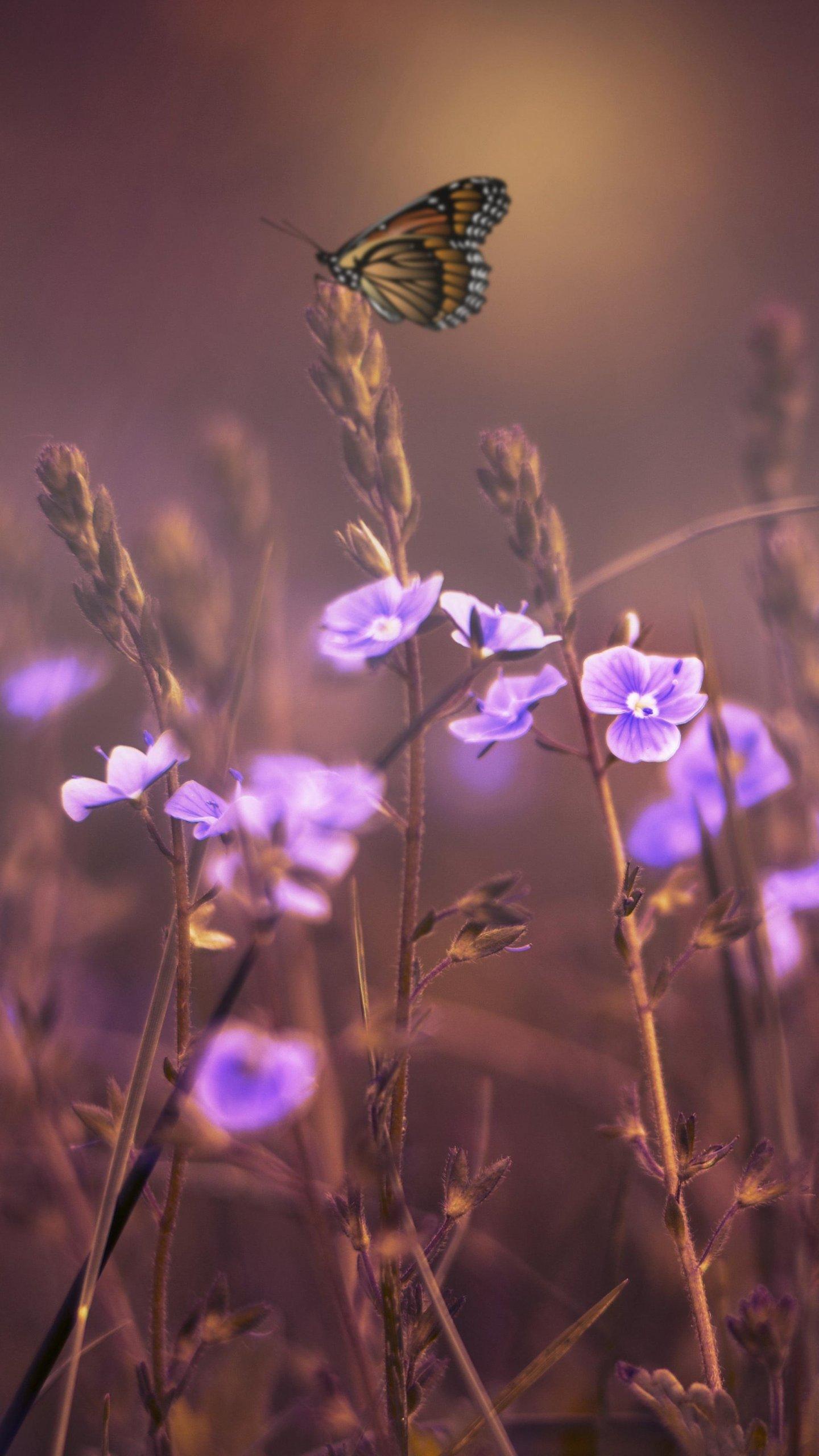 Purple Butterfly Iphone Wallpaper