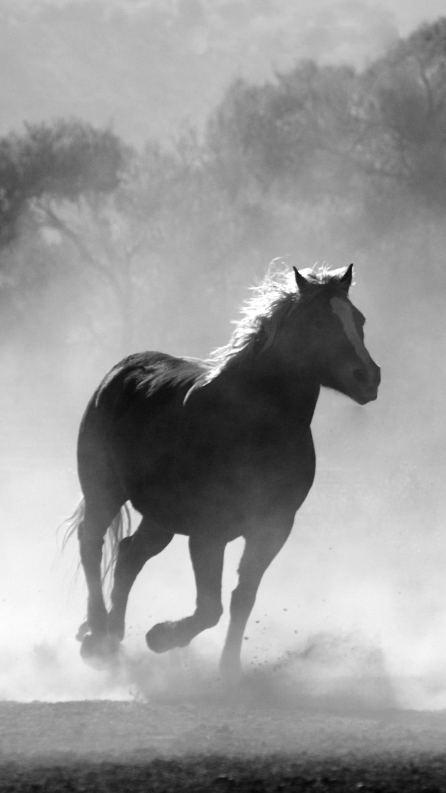 Wallpaper Of Horses Posted By Zoey Walker
