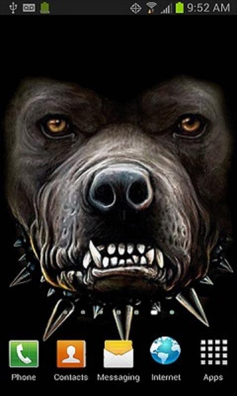 Download Live Pitbull Wallpaper Gallery
