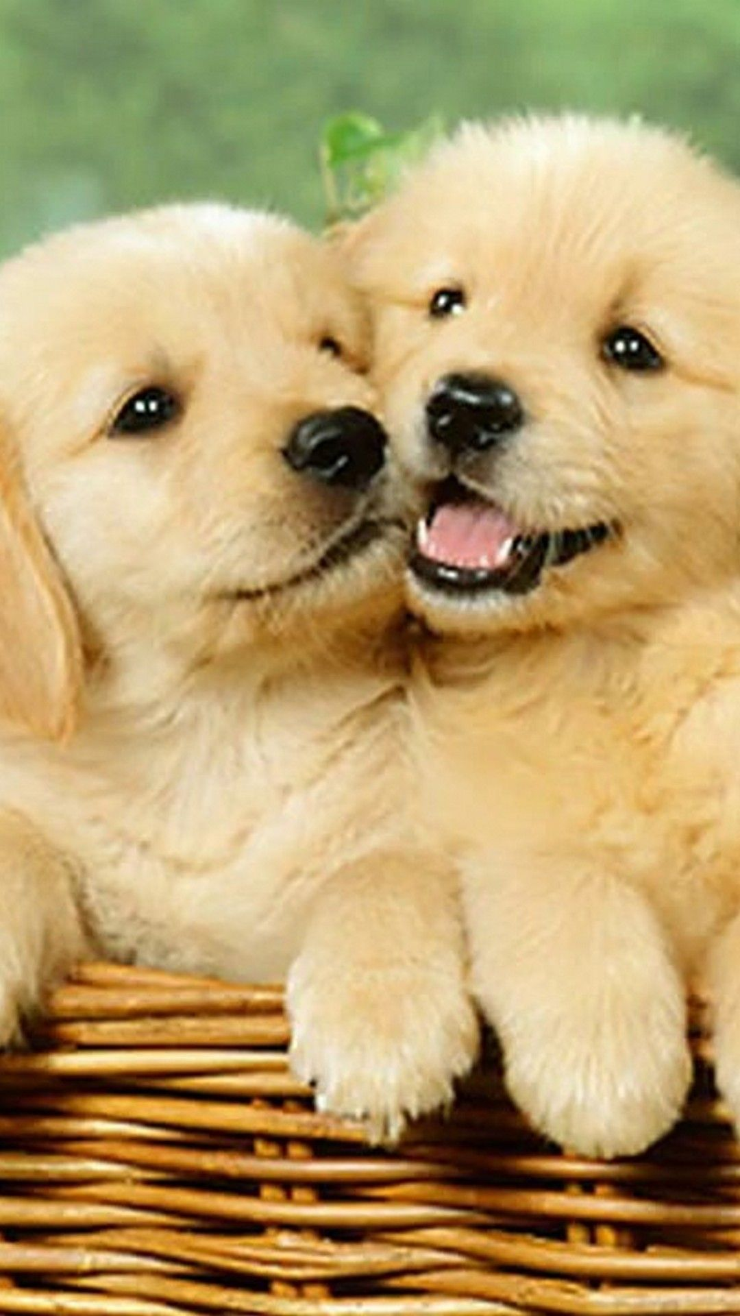 Wallpaper Of Puppys Posted By Samantha Tremblay
