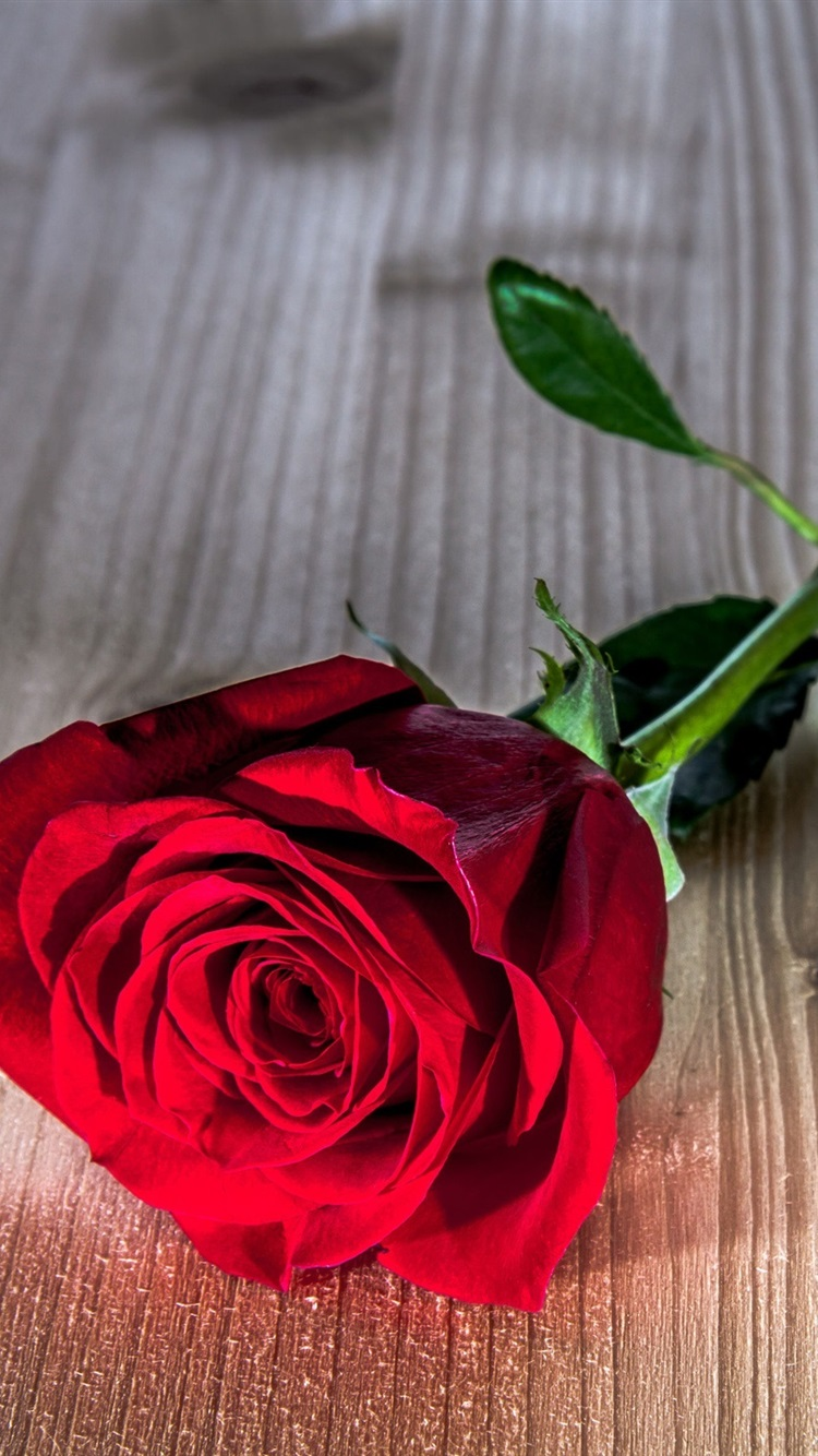 Wallpaper Roses Flowers Wallpaper Posted By Ethan Thompson