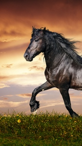 Wallpaper With Horse Posted By Michelle Anderson