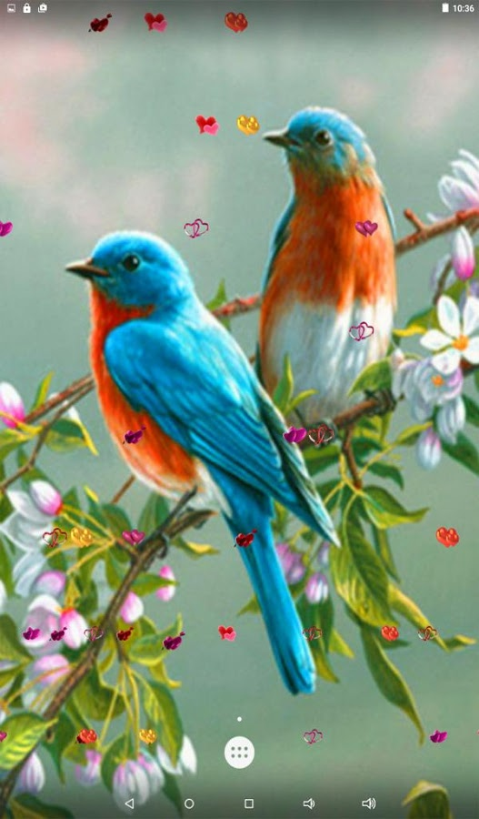 Wallpapers Bird Posted By Michelle Cunningham