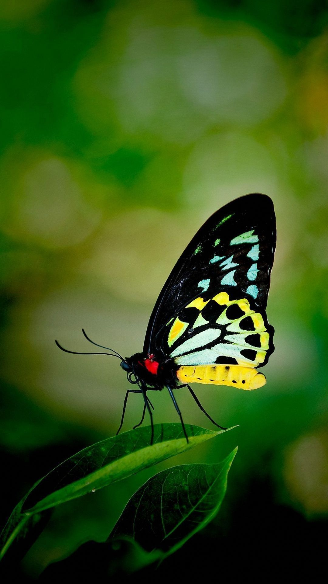 Wallpapers Butterfly Posted By Ethan Johnson