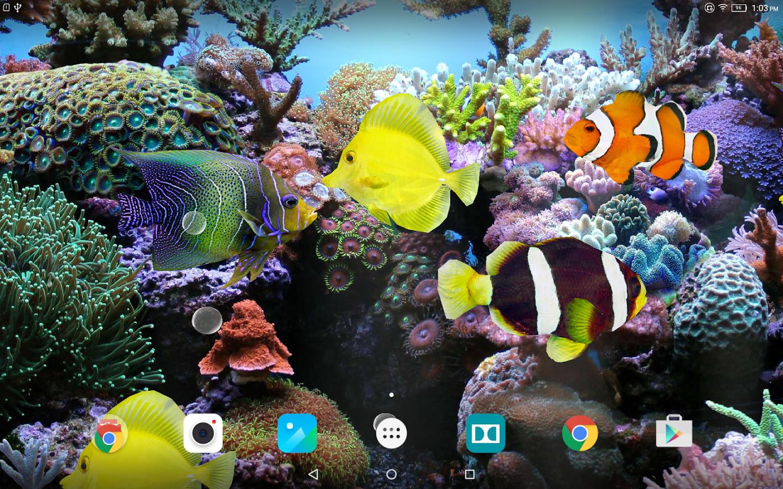 3d Live Wallpaper Picserio Fish Live Wallpaper 3d, Hd