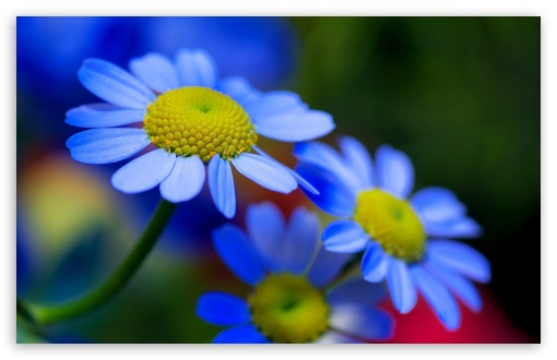 Wallpapers Flower Hd Posted By Sarah Simpson