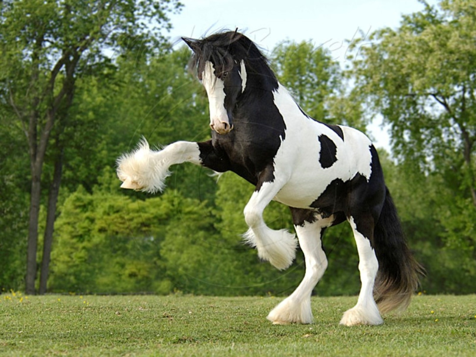 Wallpapers Horses Free