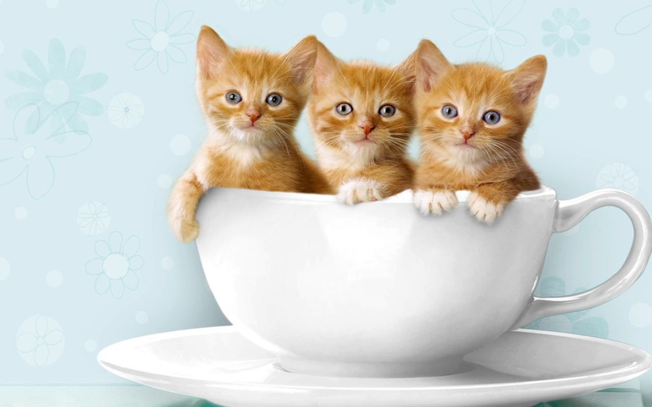 Wallpapers Kittens Posted By Sarah Tremblay