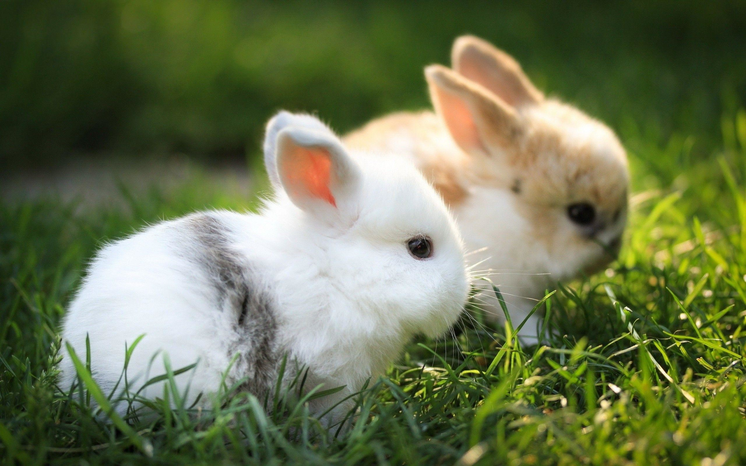 Wallpapers Of Bunnies Posted By Sarah Tremblay