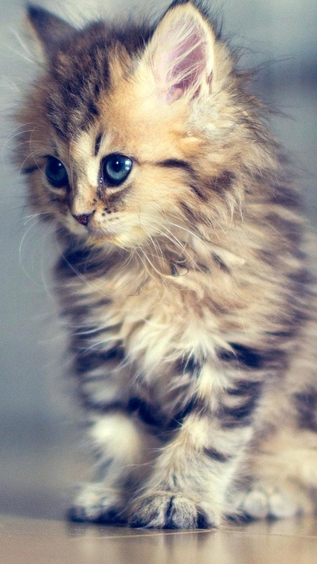 Wallpapers Of Cat Posted By Ethan Thompson