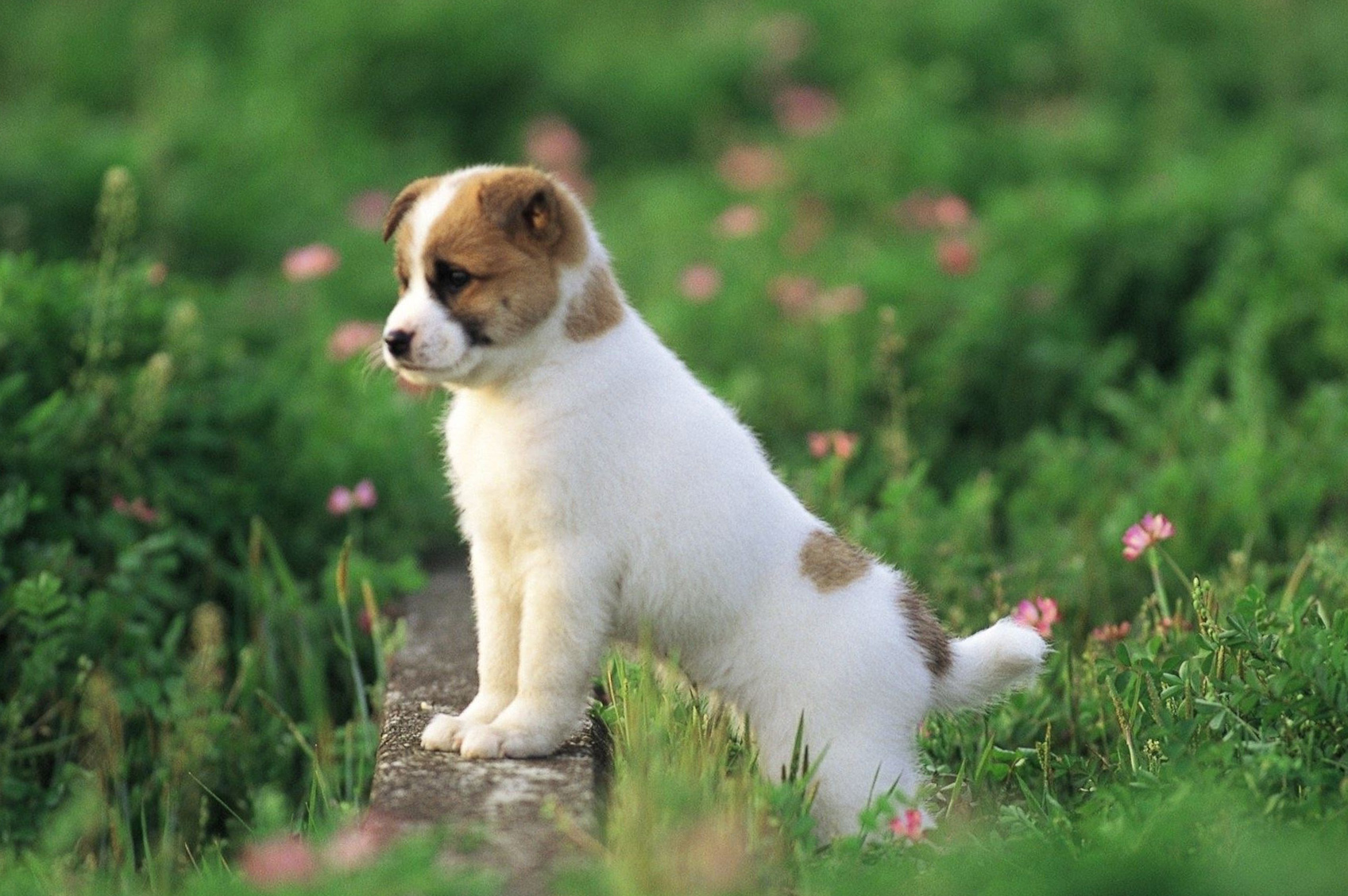 Wallpapers Of Dog Posted By Ryan Walker