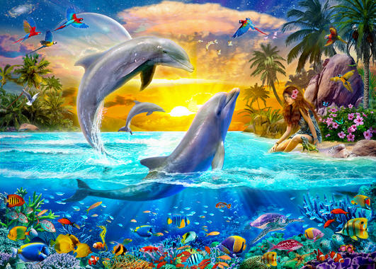 Wallpapers Of Dolphins Posted By Christopher Anderson