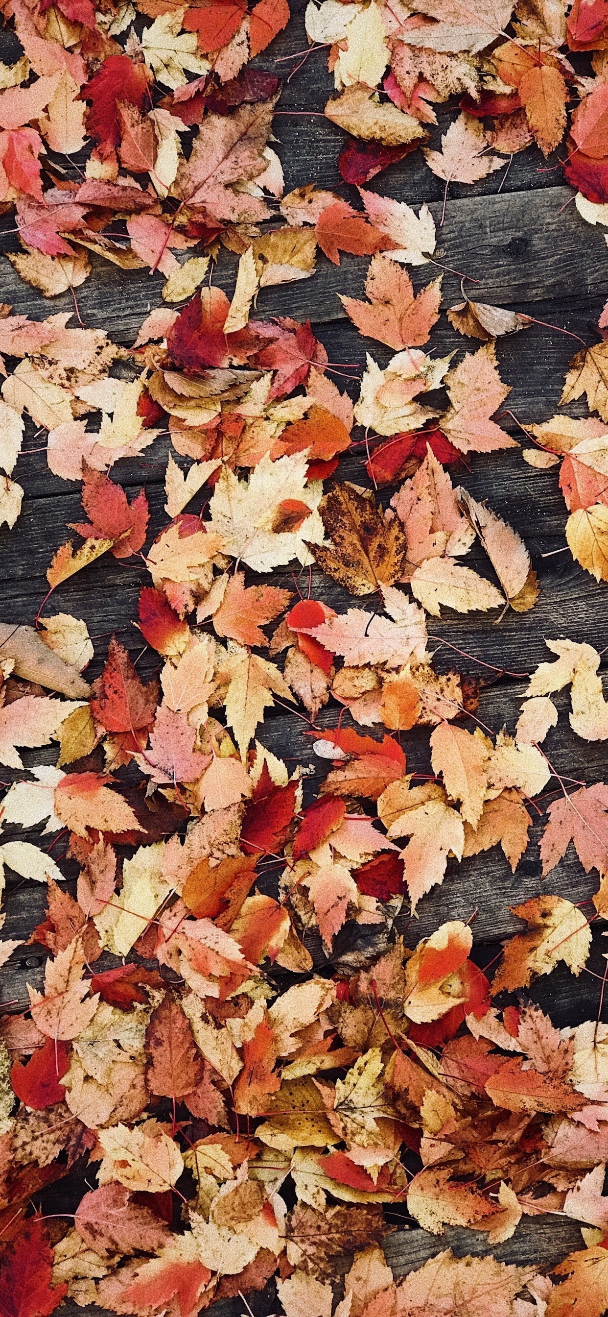 Wallpapers Of Fall Posted By Zoey Peltier
