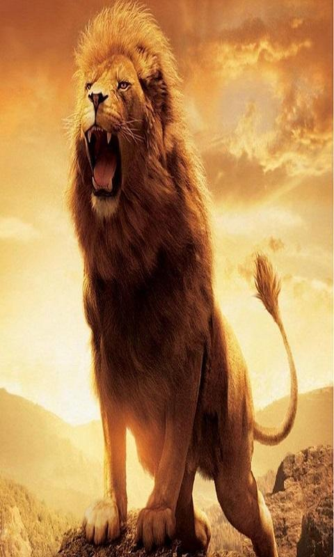 Lion Wallpapers HD for Android APK Download
