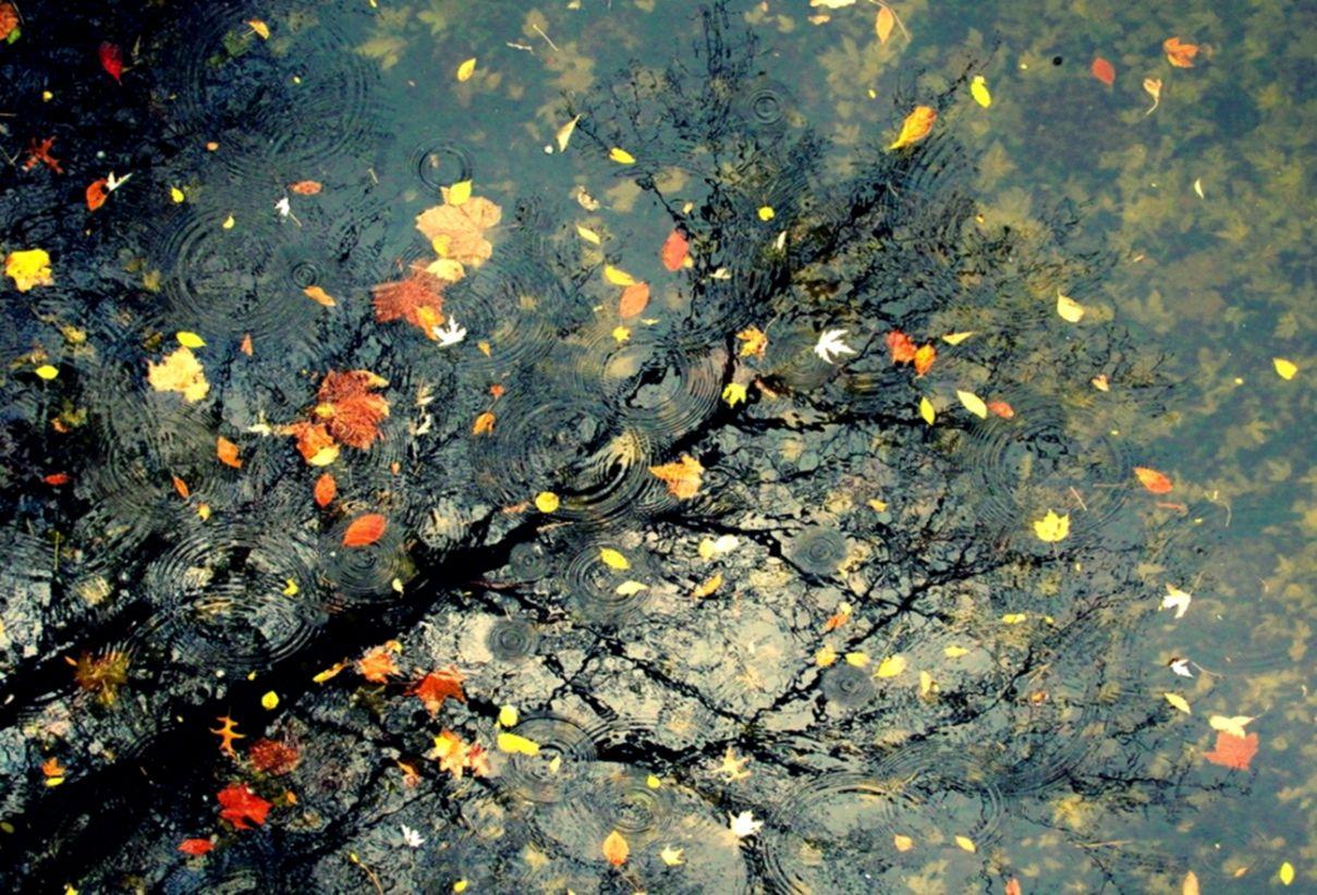 Autumn Rain Hd Wallpaper Elegant Wallpapers