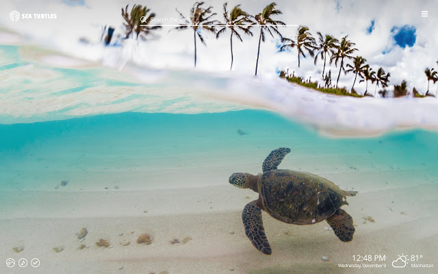 Wallpapers Turtles Posted By Samantha Anderson