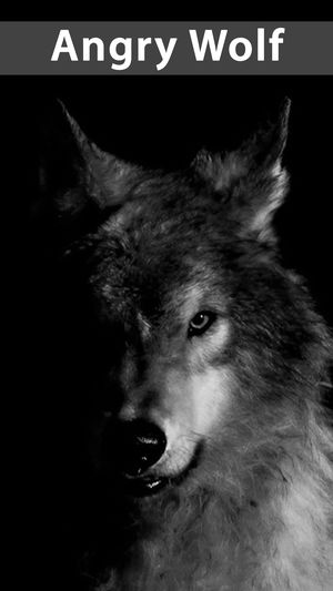 Wallpapers Wolf Posted By John Thompson