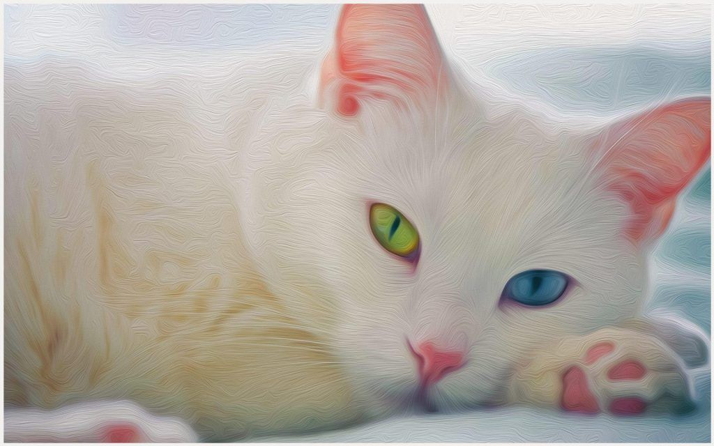 White Cat Wallpapers Posted By Samantha Anderson